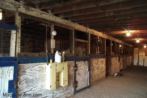 The inside of a barn that was built in the 1800s. The stables are filled with horses. A black and white cat is eating out of a food bowl