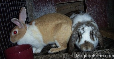 Floppy and Thumper