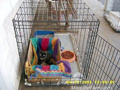 A dog crate on a stone porch of a white farm house with a cardboard box in it that has a colorful towel in it. There is a mother cat and a litter of kittens in the box and a food dish and water inside the crate, but outside of the box.