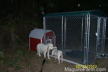 A Great Pyrenees and A Bulldog are inspecting each other next to a large dog kennel pen. There is a red doghouse behind it