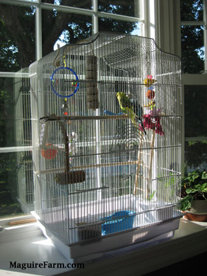 A white bird cage with a lot of toys in it on the ledge of a bay window with a blue with black and white and A green and yellow with black parakeet who are standing on a wooden perch.