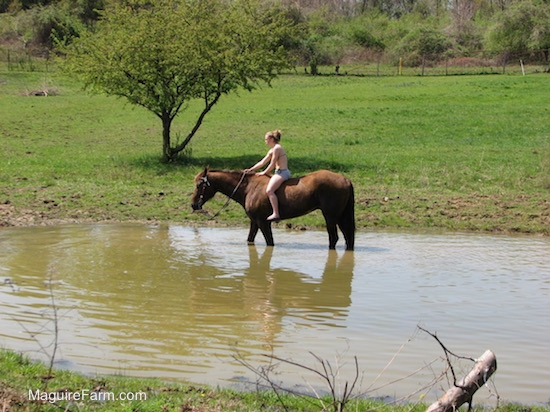 A blonde-haired girl riding her horse into a pond.